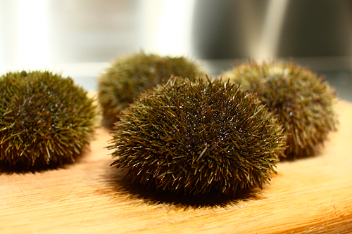 Melody Gourmet Fury Austin Food Writer And Photographer 187 Video Cleaning Sea Urchins The