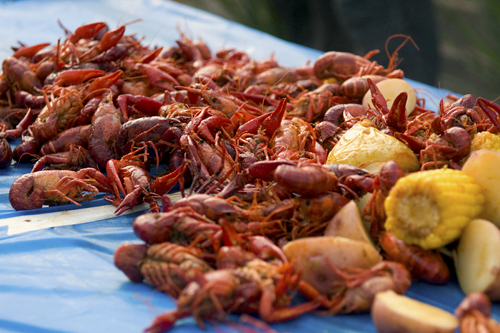crawfish boil cooked photo by Melody Fury