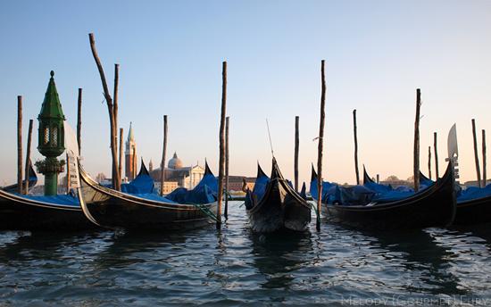 Venice Shore Venezia Venice Italy by Melody Gourmet Fury